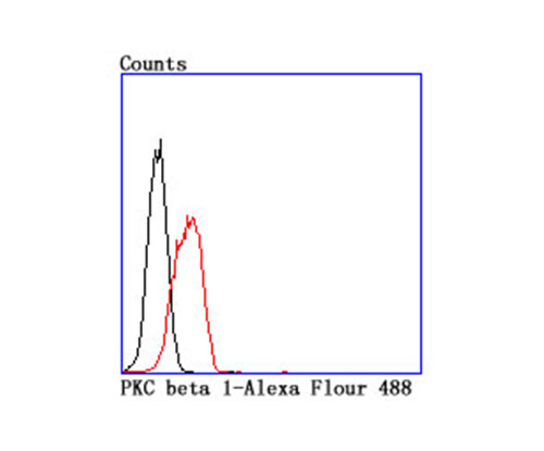 Flow cytometric analysis of K562 cells with PKC beta 1 antibody at 1/100 dilution (red) compared with an unlabelled control (cells without incubation with primary antibody; black).
