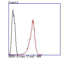 Flow cytometric analysis of SH-SY5Y cells with DDX5 antibody at 1/100 dilution (red) compared with an unlabelled control (cells without incubation with primary antibody; black).