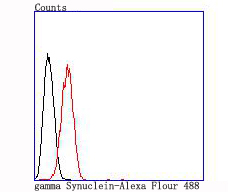 Flow cytometric analysis of Hela cells with gamma Synuclein antibody at 1/100 dilution (red) compared with an unlabelled control (cells without incubation with primary antibody; black).