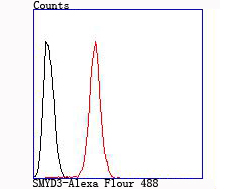 Flow cytometric analysis of Hela cells with SMYD3 antibody at 1/100 dilution (red) compared with an unlabelled control (cells without incubation with primary antibody; black).