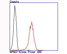 Flow cytometric analysis of 293T cells with KPNA2 antibody at 1/100 dilution (red) compared with an unlabelled control (cells without incubation with primary antibody; black).