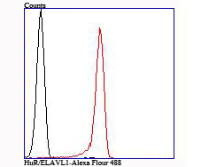 Flow cytometric analysis of Jurkat cells with HuR/ELAVL1 antibody at 1/100 dilution (red) compared with an unlabelled control (cells without incubation with primary antibody; black).