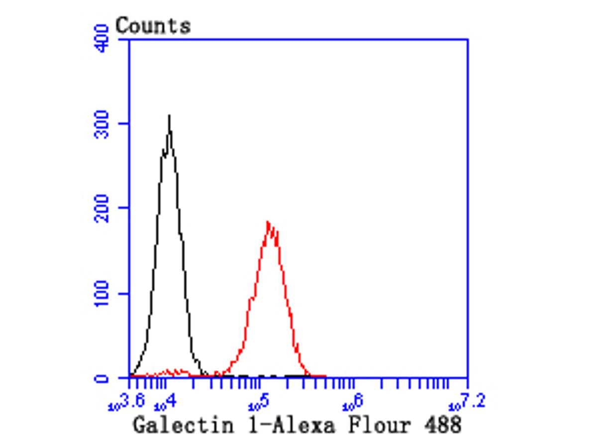 Flow cytometric analysis of Galectin 1 was done on NIH/3T3 cells. The cells were fixed, permeabilized and stained with the primary antibody (ET1705-83, 1/50) (red). After incubation of the primary antibody at room temperature for an hour, the cells were stained with a Alexa Fluor 488-conjugated Goat anti-Rabbit IgG Secondary antibody at 1/1000 dilution for 30 minutes.Unlabelled sample was used as a control (cells without incubation with primary antibody; black).