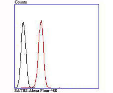 Flow cytometric analysis of SATB2 was done on SH-SY5Y cells. The cells were fixed, permeabilized and stained with the primary antibody (ET1705-95, 1/50) (red). After incubation of the primary antibody at room temperature for an hour, the cells were stained with a Alexa Fluor 488-conjugated Goat anti-Rabbit IgG Secondary antibody at 1/1000 dilution for 30 minutes.Unlabelled sample was used as a control (cells without incubation with primary antibody; black).