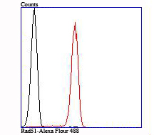 Flow cytometric analysis of Rad51 was done on Jurkat cells. The cells were fixed, permeabilized and stained with the primary antibody (ET1705-96, 1/50) (red). After incubation of the primary antibody at room temperature for an hour, the cells were stained with a Alexa Fluor 488-conjugated Goat anti-Rabbit IgG Secondary antibody at 1/1000 dilution for 30 minutes.Unlabelled sample was used as a control (cells without incubation with primary antibody; black).