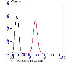 Flow cytometric analysis of Hela cells with USP22 antibody at 1/100 dilution (red) compared with an unlabelled control (cells without incubation with primary antibody; black). Alexa Fluor 488-conjugated goat anti rabbit IgG was used as the secondary antibody.