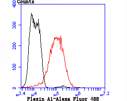 Flow cytometric analysis of LOVO cells with Plexin A1 antibody at 1/50 dilution (red) compared with an unlabelled control (cells without incubation with primary antibody; black). Alexa Fluor 488-conjugated goat anti rabbit IgG was used as the secondary antibody.