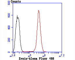 Flow cytometric analysis of Hela cells with Zyxin antibody at 1/100 dilution (red) compared with an unlabelled control (cells without incubation with primary antibody; black). Alexa Fluor 488-conjugated goat anti rabbit IgG was used as the secondary antibody.