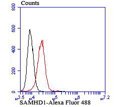 Flow cytometric analysis of K562 cells with SAMHD1 antibody at 1/100 dilution (red) compared with an unlabelled control (cells without incubation with primary antibody; black).