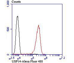 Western blot analysis of USP14 on Zebrafish tissue lysates using anti-USP14 antibody at 1/200 dilution.