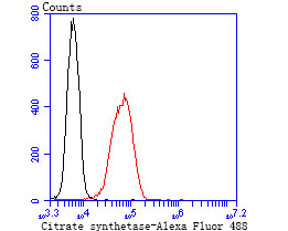 Flow cytometric analysis of 293T cells with Citrate synthetase antibody at 1/50 dilution (blue) compared with an unlabelled control (cells without incubation with primary antibody; red). Alexa Fluor 488-conjugated goat anti rabbit IgG was used as the secondary antibody.