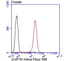 Flow cytometric analysis of Jurkat cells with ZAP70 antibody at 1/100 dilution (red) compared with an unlabelled control (cells without incubation with primary antibody; black). Alexa Fluor® 488-conjugated goat anti-rabbit IgG was used as the secondary antibody.