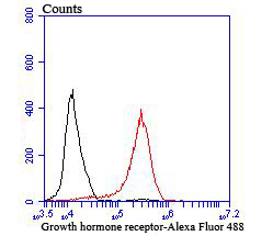 Flow cytometric analysis of MCF-7 cells with Growth hormone receptor antibody at 1/100 dilution (red) compared with an unlabelled control (cells without incubation with primary antibody; black). Alexa Fluor 488-conjugated goat anti rabbit IgG was used as the secondary antibody.