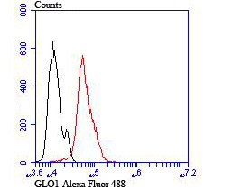 Flow cytometric analysis of Hela cells with GLO1 antibody at 1/100 dilution (red) compared with an unlabelled control (cells without incubation with primary antibody; black).