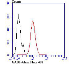 Flow cytometric analysis of Hela cells with GAB1 antibody at 1/100 dilution (red) compared with an unlabelled control (cells without incubation with primary antibody; black). Alexa Fluor 488-conjugated goat anti-rabbit IgG was used as the secondary antibody.