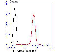 Flow cytometric analysis of A549 cells with GIT1 antibody at 1/100 dilution (red) compared with an unlabelled control (cells without incubation with primary antibody; black).