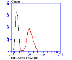 Flow cytometric analysis of SH-SY-5Y cells with EB3 antibody at 1/100 dilution (red) compared with an unlabelled control (cells without incubation with primary antibody; black). Alexa Fluor 488-conjugated goat anti-rabbit IgG was used as the secondary antibody.