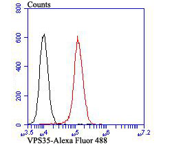 Flow cytometric analysis of 293T cells with VPS35 antibody at 1/100 dilution (red) compared with an unlabelled control (cells without incubation with primary antibody; black). Alexa Fluor 488-conjugated goat anti-rabbit IgG was used as the secondary antibody.