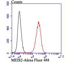 Flow cytometric analysis of K562 cells with MEIS2 antibody at 1/100 dilution (red) compared with an unlabelled control (cells without incubation with primary antibody; black). Alexa Fluor 488-conjugated goat anti-rabbit IgG was used as the secondary antibody.