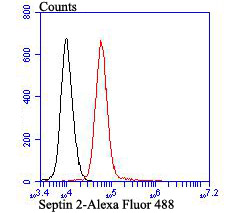 Flow cytometric analysis of K562 cells with Septin 2 antibody at 1/50 dilution (red) compared with an unlabelled control (cells without incubation with primary antibody; black). Alexa Fluor 488-conjugated goat anti-rabbit IgG was used as the secondary antibody.