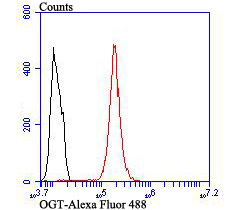 Flow cytometric analysis of Hela cells with OGT antibody at 1/100 dilution (red) compared with an unlabelled control (cells without incubation with primary antibody; black). Alexa Fluor 488-conjugated goat anti rabbit IgG was used as the secondary antibody