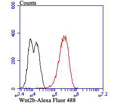 Flow cytometric analysis of LOVO cells with Wnt2b antibody at 1/50 dilution (red) compared with an unlabelled control (cells without incubation with primary antibody; black). Alexa Fluor 488-conjugated goat anti-rabbit IgG was used as the secondary antibody.