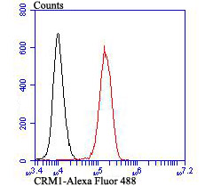 Flow cytometric analysis of K562 cells with CRM1 antibody at 1/100 dilution (red) compared with an unlabelled control (cells without incubation with primary antibody; black). Alexa Fluor 488-conjugated goat anti rabbit IgG was used as the secondary antibody.