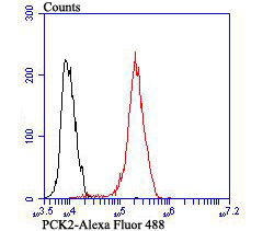 Flow cytometric analysis of MCF-7 cells with PCK2 antibody at 1/100 dilution (red) compared with an unlabelled control (cells without incubation with primary antibody; black). Alexa Fluor 488-conjugated goat anti rabbit IgG was used as the secondary antibody.