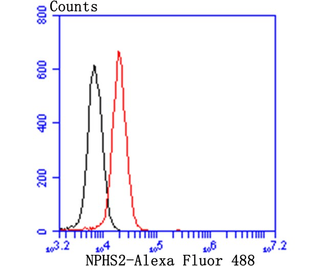 Flow cytometric analysis of NPHS2 was done on 293T cells. The cells were fixed, permeabilized and stained with the primary antibody (ET7107-34, 1/50) (red). After incubation of the primary antibody at room temperature for an hour, the cells were stained with a Alexa Fluor 488-conjugated Goat anti-Rabbit IgG Secondary antibody at 1/1000 dilution for 30 minutes.Unlabelled sample was used as a control (cells without incubation with primary antibody; black).