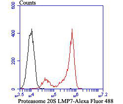 Flow cytometric analysis of Daudi cells with Proteasome 20S LMP7 antibody at 1/100 dilution (red) compared with an unlabelled control (cells without incubation with primary antibody; black). Alexa Fluor 488-conjugated goat anti-rabbit IgG was used as the secondary antibody.