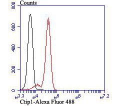 Flow cytometric analysis of Jurkat cells with Ctip1 antibody at 1/100 dilution (red) compared with an unlabelled control (cells without incubation with primary antibody; black). Alexa Fluor 488-conjugated goat anti-rabbit IgG was used as the secondary antibody.