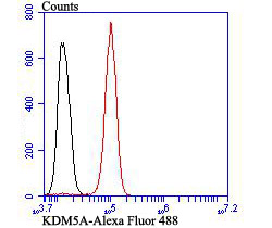 Flow cytometric analysis of SH-SY-5Y cells with KDM5A antibody at 1/100 dilution (red) compared with an unlabelled control (cells without incubation with primary antibody; black). Alexa Fluor 488-conjugated goat anti-rabbit IgG was used as the secondary antibody.