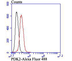 Flow cytometric analysis of PDK2 was done on SH-SY5Y cells. The cells were fixed, permeabilized and stained with the primary antibody (ET7107-46, 1/50) (red). After incubation of the primary antibody at room temperature for an hour, the cells were stained with a Alexa Fluor 488-conjugated Goat anti-Rabbit IgG Secondary antibody at 1/1000 dilution for 30 minutes.Unlabelled sample was used as a control (cells without incubation with primary antibody; black).