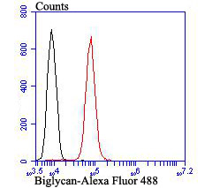 Flow cytometric analysis of HepG2 cells with Biglycan antibody at 1/100 dilution (red) compared with an unlabelled control (cells without incubation with primary antibody; black). Alexa Fluor 488-conjugated goat anti-rabbit IgG was used as the secondary antibody.