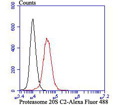 Flow cytometric analysis of K562 cells with Proteasome 20S C2 antibody at 1/100 dilution (red) compared with an unlabelled control (cells without incubation with primary antibody; black). Alexa Fluor 488-conjugated goat anti rabbit IgG was used as the secondary antibody.