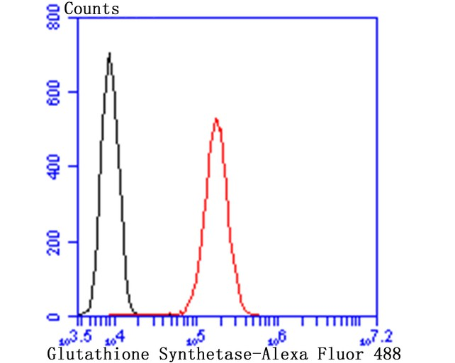 Flow cytometric analysis of HepG2 cells with Glutathione Synthetase antibody at 1/100 dilution (red) compared with an unlabelled control (cells without incubation with primary antibody; black). Alexa Fluor 488-conjugated goat anti rabbit IgG was used as the secondary antibody.