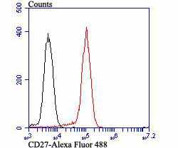 Flow cytometric analysis of CD27 was done on Daudi cells. The cells were fixed, permeabilized and stained with the primary antibody (ET7107-73, 1/50) (red). After incubation of the primary antibody at room temperature for an hour, the cells were stained with a Alexa Fluor 488-conjugated Goat anti-Rabbit IgG Secondary antibody at 1/1000 dilution for 30 minutes.Unlabelled sample was used as a control (cells without incubation with primary antibody; black).