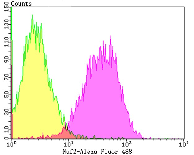 Flow cytometric analysis of A431 cells with Nuf2 antibody at 1/50 dilution (purple) compared with an unlabelled control (cells without incubation with primary antibody; yellow). Alexa Fluor 488-conjugated goat anti-rabbit IgG was used as the secondary antibody.