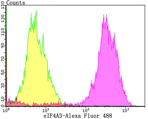 Flow cytometric analysis of MCF-7 cells with eIF4A3 antibody at 1/50 dilution (purple) compared with an unlabelled control (cells without incubation with primary antibody; yellow). Alexa Fluor 488-conjugated goat anti-rabbit IgG was used as the secondary antibody.
