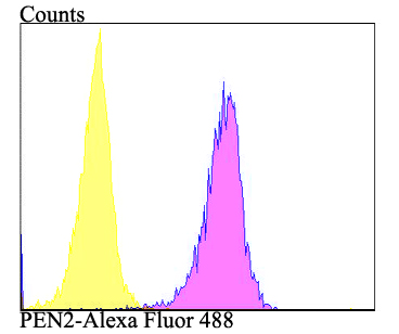 Flow cytometric analysis of PEN2 was done on A549 cells. The cells were fixed, permeabilized and stained with the primary antibody (ET7109-26, 1/50) (purple). After incubation of the primary antibody at room temperature for an hour, the cells were stained with a Alexa Fluor 488-conjugated Goat anti-Rabbit IgG Secondary antibody at 1/1000 dilution for 30 minutes.Unlabelled sample was used as a control (cells without incubation with primary antibody; yellow).