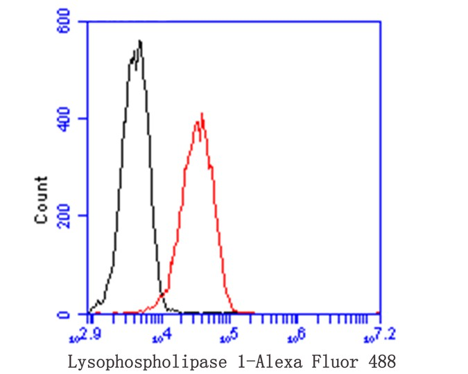 Flow cytometric analysis of Lysophospholipase 1 was done on THP-1 cells. The cells were fixed, permeabilized and stained with the primary antibody (ET7109-63, 1/100) (red). After incubation of the primary antibody at room temperature for an hour, the cells were stained with a Alexa Fluor 488-conjugated goat anti-rabbit IgG Secondary antibody at 1/500 dilution for 30 minutes.Unlabelled sample was used as a control (cells without incubation with primary antibody; black).
