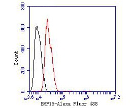 Flow cytometric analysis of BMP15 was done on Hela cells. The cells were fixed, permeabilized and stained with the primary antibody (ET7110-03, 1/50) (red). After incubation of the primary antibody at room temperature for an hour, the cells were stained with a Alexa Fluor 488-conjugated Goat anti-Rabbit IgG Secondary antibody at 1/1000 dilution for 30 minutes.Unlabelled sample was used as a control (cells without incubation with primary antibody; black).
