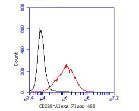 Flow cytometric analysis of CD239 was done on JAR cells. The cells were fixed, permeabilized and stained with the primary antibody (ET7110-04, 1/50) (red). After incubation of the primary antibody at room temperature for an hour, the cells were stained with a Alexa Fluor 488-conjugated Goat anti-Rabbit IgG Secondary antibody at 1/1000 dilution for 30 minutes.Unlabelled sample was used as a control (cells without incubation with primary antibody; black).