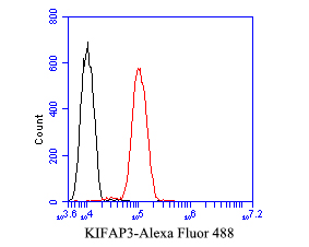 Flow cytometric analysis of KIFAP3 was done on SH-SY5Y cells. The cells were fixed, permeabilized and stained with the primary antibody (ET7110-28, 1/50) (red). After incubation of the primary antibody at room temperature for an hour, the cells were stained with a Alexa Fluor 488-conjugated Goat anti-Rabbit IgG Secondary antibody at 1/1000 dilution for 30 minutes.Unlabelled sample was used as a control (cells without incubation with primary antibody; black).