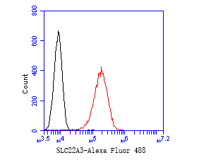 Flow cytometric analysis of SLC22A3 was done on A549 cells. The cells were fixed, permeabilized and stained with the primary antibody (ET7110-35, 1/50) (red). After incubation of the primary antibody at room temperature for an hour, the cells were stained with a Alexa Fluor 488-conjugated Goat anti-Rabbit IgG Secondary antibody at 1/1000 dilution for 30 minutes.Unlabelled sample was used as a control (cells without incubation with primary antibody; black).