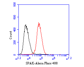 Flow cytometric analysis of SPAK was done on Daudi cells. The cells were fixed, permeabilized and stained with the primary antibody (ET7110-37, 1/50) (red). After incubation of the primary antibody at room temperature for an hour, the cells were stained with a Alexa Fluor 488-conjugated Goat anti-Rabbit IgG Secondary antibody at 1/1000 dilution for 30 minutes.Unlabelled sample was used as a control (cells without incubation with primary antibody; black).