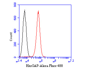 Flow cytometric analysis of RhoGAP was done on SiHa cells. The cells were fixed, permeabilized and stained with the primary antibody (ET7110-65, 1/50) (red). After incubation of the primary antibody at room temperature for an hour, the cells were stained with a Alexa Fluor 488-conjugated Goat anti-Rabbit IgG Secondary antibody at 1/1000 dilution for 30 minutes.Unlabelled sample was used as a control (cells without incubation with primary antibody; black).