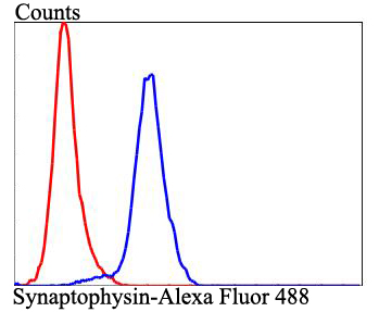Flow cytometric analysis of SHG-44 cells with Synaptophysin antibody at 1/100 dilution (blue) compared with an unlabelled control (cells without incubation with primary antibody; red). Alexa Fluor 488-conjugated goat anti-mouse IgG was used as the secondary antibody.