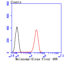 Flow cytometric analysis of B16F1 cells with tyrosinase antibody at 1/100 dilution (red) compared with an unlabelled control (cells without incubation with primary antibody; black). Alexa Fluor 488-conjugated Goat anti mouse IgG was used as the secondary antibody