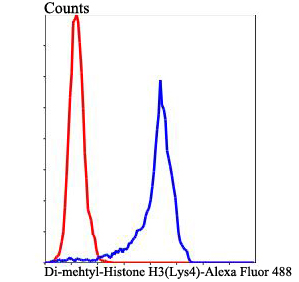 Flow cytometric analysis of Di-mehtyl-Histone H3(Lys4) was done on Hela cells. The cells were fixed, permeabilized and stained with Di-mehtyl-Histone H3(Lys4) antibody at 1/100 dilution (blue) compared with an unlabelled control (cells without incubation with primary antibody; red). After incubation of the primary antibody on room temperature for an hour, the cells was stained with a Alexa Fluor™ 488-conjugated goat anti-rabbit IgG Secondary antibody at 1/500 dilution for 30 minutes.